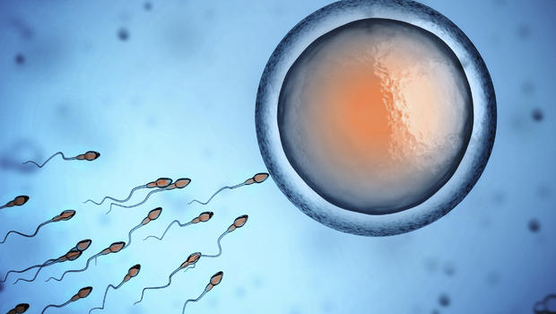 Lab Grown Human Eggs and Sperm